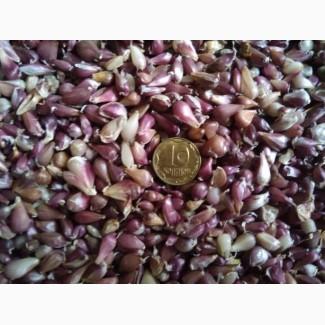 Продам насіння часнику воздушка