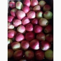 Продам яблука з холодильника (газовані)