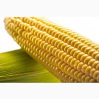 Контракт на Укр.кукурузу.FOB Одесса по 50 000 тонн