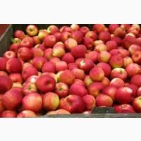 Купимо яблуко для переробки