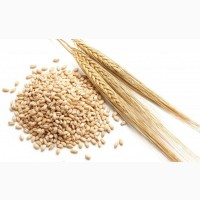 Куплю зерно ячменя