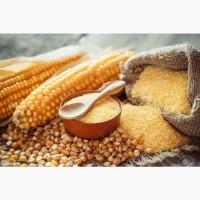 На постійній основі реалізуємо кукурудзяну крупу