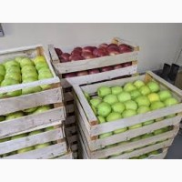 Реалізуємо яблука червоних та жовтих сортів від 10т
