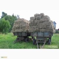 Молочно-товарная ферма купит высококачественное сено