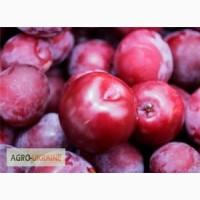 Якісні саженци яблонь разних сортів