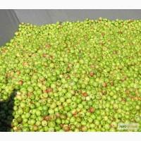 Закупка яблока на переработку пюре
