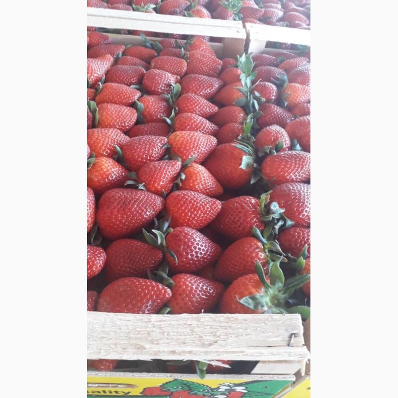 Продаем клубнику из Греции, Киев