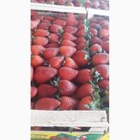Продаем клубнику из Греции