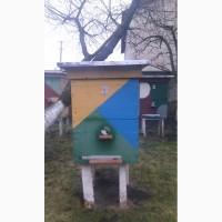 Подам бджолосімї