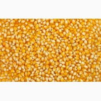 Компанія закупляє Пшеницю(Фураж)Кукурудзу відходи кукурудзячмінь сою!!! ВСЯ УКРАЇНА
