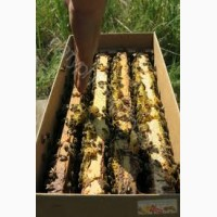 Бджолорозплiдник м. Мукачево реалiзуэ пакети по Украiнi