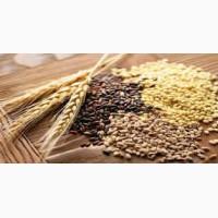 Услуги сушки зерна, масличных культур