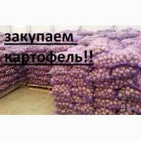 Закупаю гранаду королева анна ред леди ред скарлет Черниговская обл