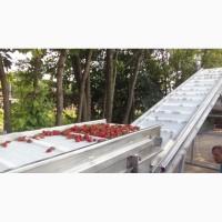 Конвейеры ленточные для сортировки ягод, а также для их сушки после моечной машины