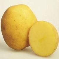 Насіннєва картопля перша репродукція сорти Европлант Беллароза, Венета, Вівіана