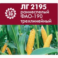 Силосный гибрид кукурузы Limagrain ЛГ 2195 раннеспелый ФАО-190 трехлинейный