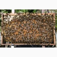 Продам пчелопакеты. Своя пасека