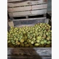 Оптовая продажа яблок 2 сорт