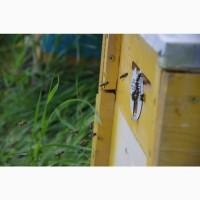Продам пчелопакеты, пчелосемьи, пчел