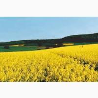 Компания зернотрейдер купит масличные