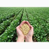 Купуємо Сою врожай 2019-2020