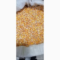 Продам зерно кукурузи