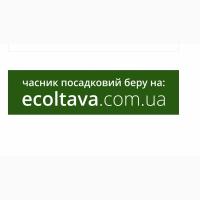Сорт Любаша, зубок/однозубка/воздушка