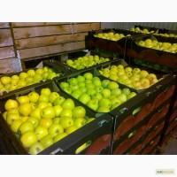 Яблоки и Груши Польские от Производителя
