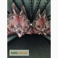 Компенсированные четверти говядины - (Бык - Молодняк) (Halal)
