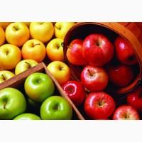 Куплю качественные яблоки летних, осенних и зимних сортов