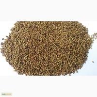 Семена люцерны, безнал 65грн с ПДВ