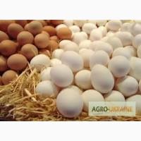 Продаю куриные яйца