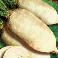 Продаем семена кормового буряка (свеклы) Польского и Украинского