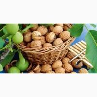 Покупаю бойный грецкий орех дорого, урожай 2018