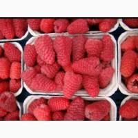 Продам свежую ягоду малины можно с поля. Летние сорта- Феномен и ГленАмпл