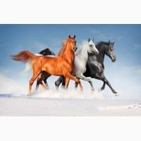 Куплю лошадей ОПТОМ