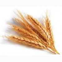 Комплексные удобрения ARVI для озимого рапса и озимых зерновых культур