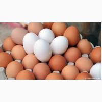 Продам яйця столові курячі