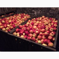 Продам яблука сорту Айдарет первого и второго сорта