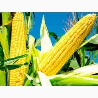 Закупівля кукурудзи. Самовивіз