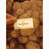 Картофель из Республики Беларусь от производителя : Бриз, Королева Анна, Белароза