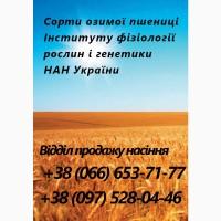 Насіння. Озима пшениця - Богдана, Сотниця, Фаворитка. Насіння від виробника