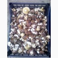 Продам грибы. Маслята соленое-отварные(бочковые)2020