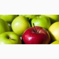 Продажа яблуко оптом чемпион