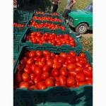 Продам помидор супер качества, сорт пьетра-росса, диафант, 34.02