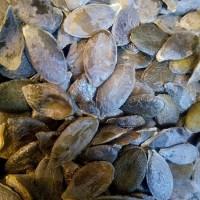 Куплю семечки голосеменной тыквы
