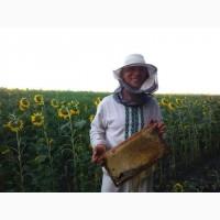 Візьму в оренду пасіку/бджолосім#039;ї