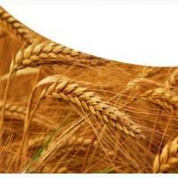 Требуется Комбайн на уборку зерновых