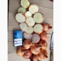Продам лук для выгонки пера в Житомире