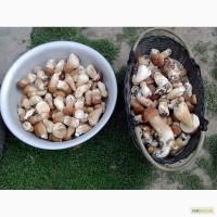 Продам сушений білий гриб